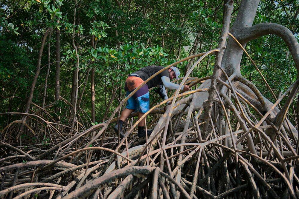 resex mãe grande de curuçá, imagem do mangue