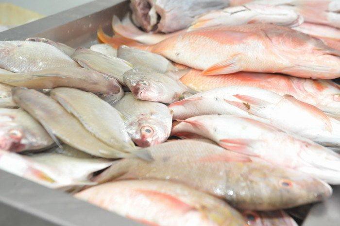 Dilma liberou pesca em período reprodutivo, imagem de peixes em peixaria