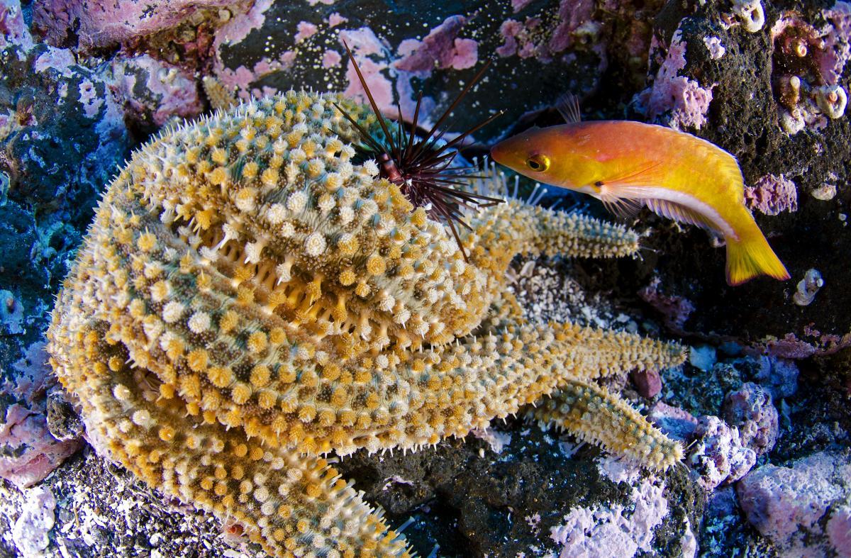 Parque marinho, imagem de peixes em corais