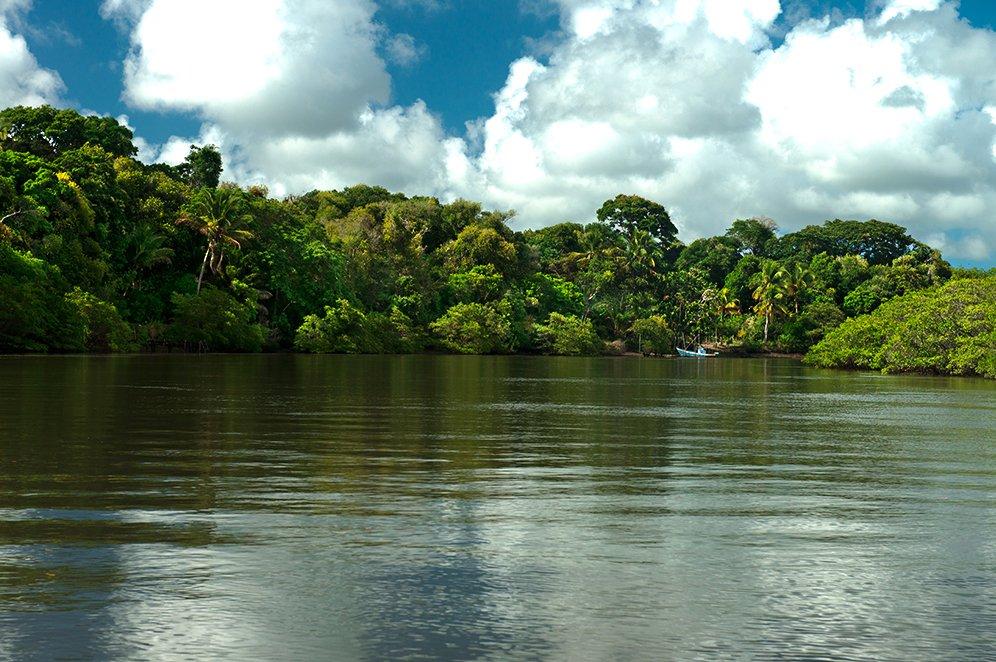 imagem da mata atlântica da Reserva Extrativista de Cassurubá