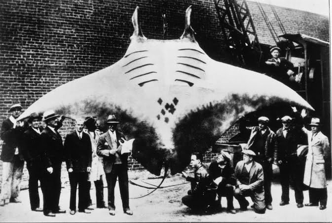foto de raia jamanta pescada antigamente