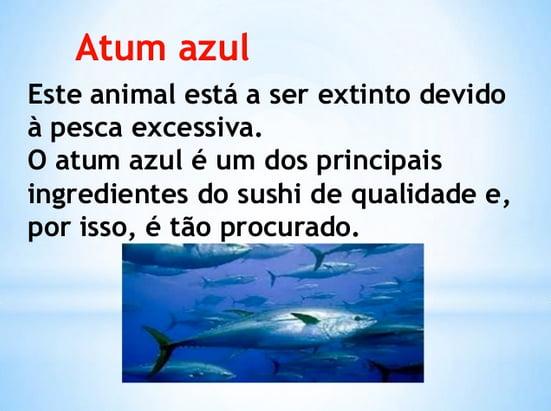 pesca de atum no mundo