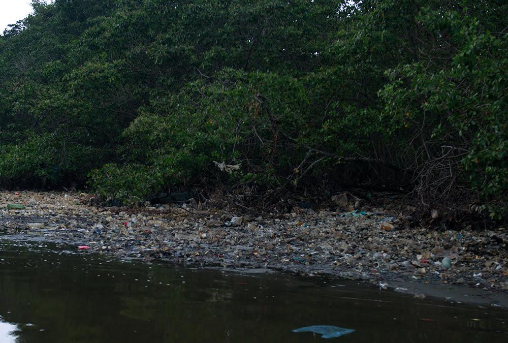 imagem de manguezal poluído na baía de guanabara