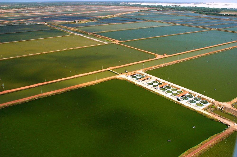 imagem do rio Jaguaribe, CE, poluído