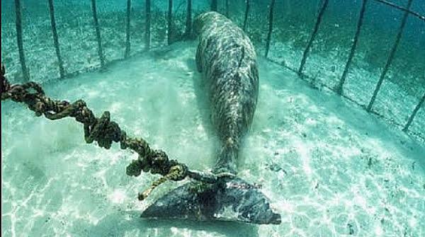 Mamíferos marinhos em cativeiro, imagem de Mamíferos marinhos em cativeiro
