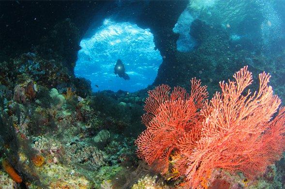 Corais de Raja Ampat: show da natureza, imagem dos corais de Raja Ampat