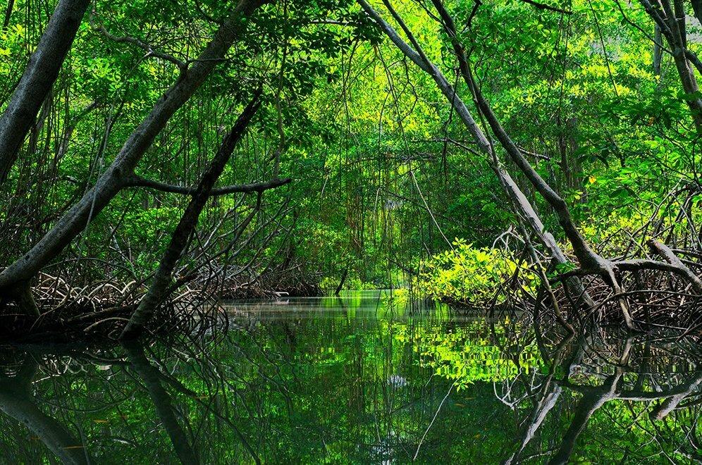 imagem de manguezal na Reserva Extrativista de São João da Ponta