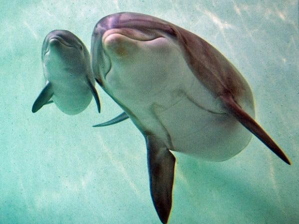 Golfinhos, bonitinhos mas ordinários, imagem de golfinhos