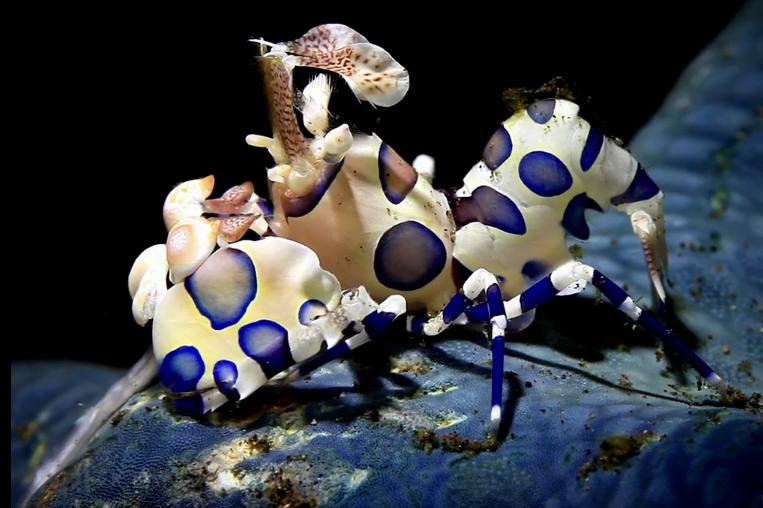 Criaturas marinhas inimagináveis, imagem de criatura marinha desconhecida