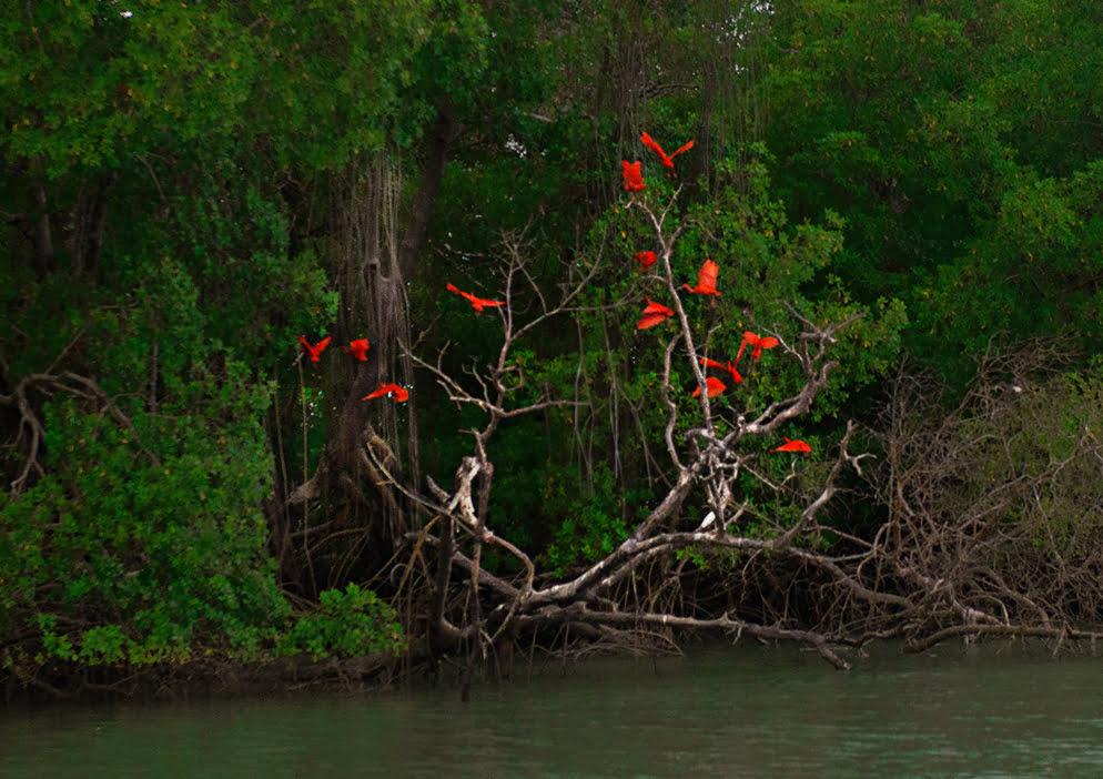imagem da Reserva Extrativista de Cururupu