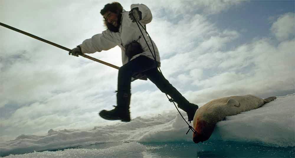 Fotos incríveis no mar, imagem de esquimó