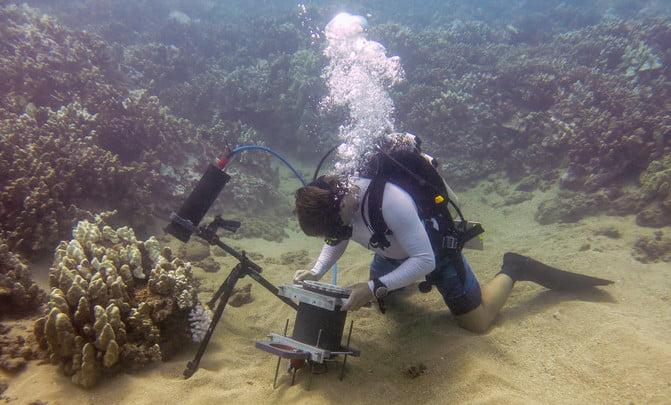 comportamento dos corais