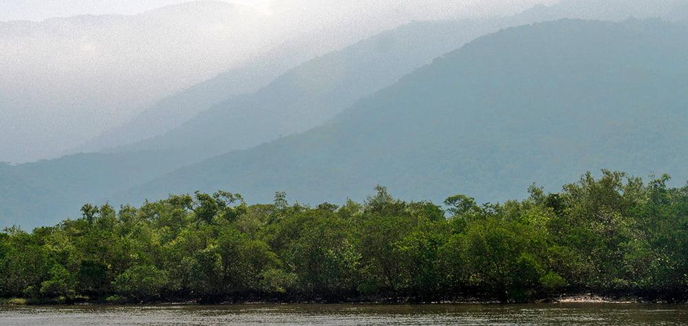 imagem de mangue no Canal da Bertioga