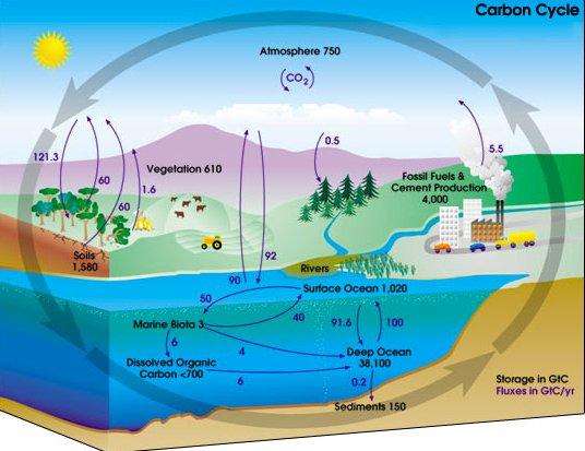 Oceanos, saúde no limite, imagem de ilustração mostrando o ciclo do carbono