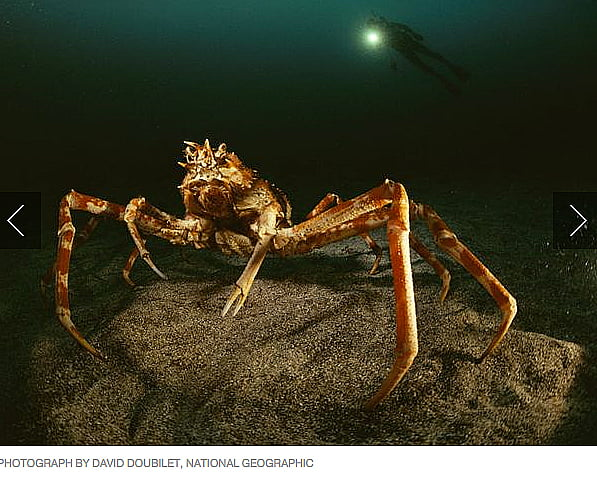 Criaturas marinhas bizarras