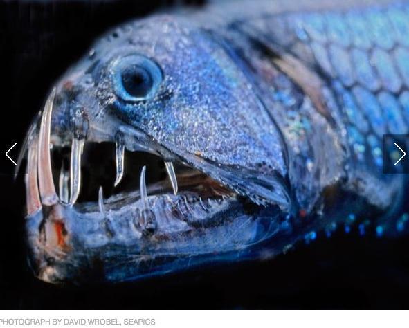 Criaturas marinhas bizarras, imagem de Criaturas marinhas bizarras