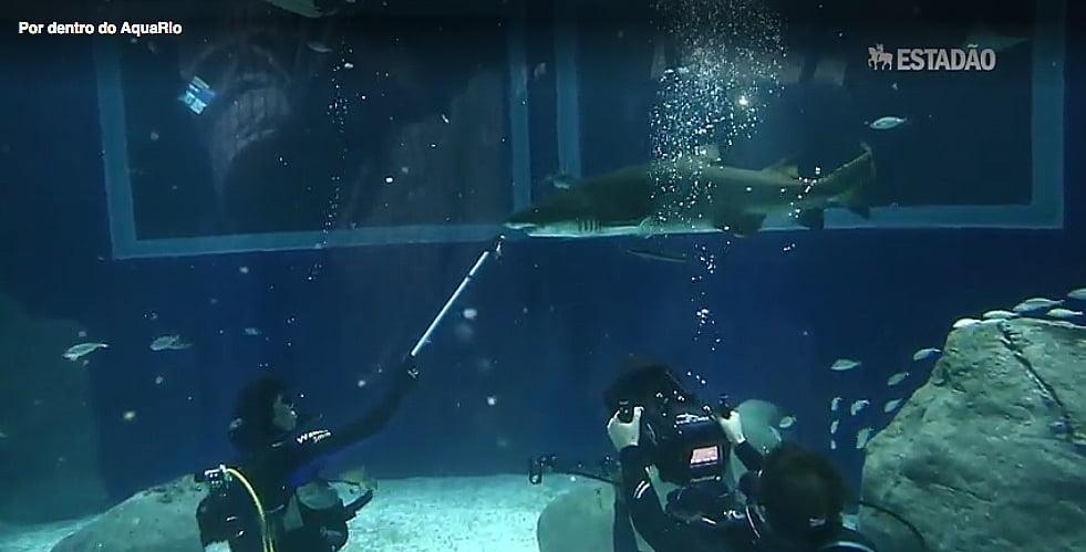 aquário do rio de janeiro, imagem de um dos tanques do aquário do rio de janeiro