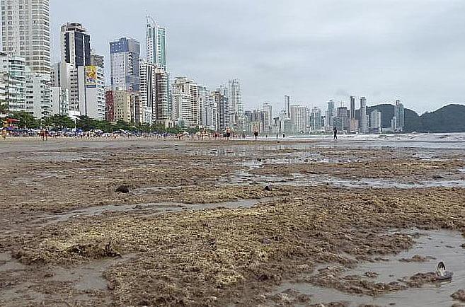 Balneário Camboriú, imagem da praia de Camboriú coberta de briozoários