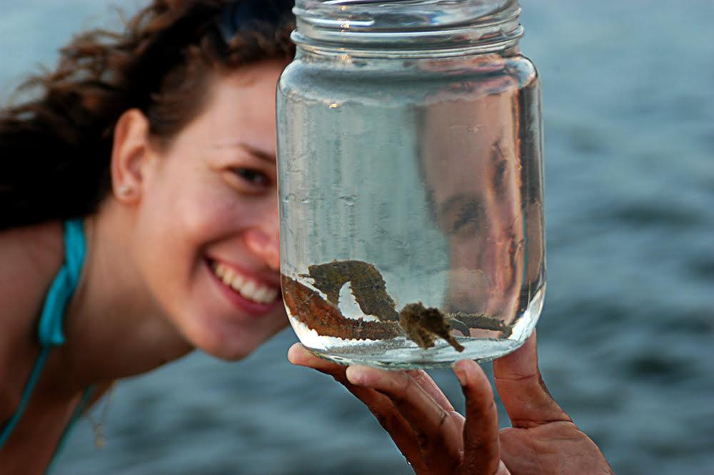 cavao-marinho, imagem de Cavalo- marinho num vidro sendo mostrado para turista