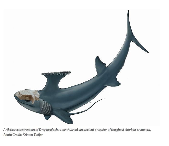 Tubarão- fantasma