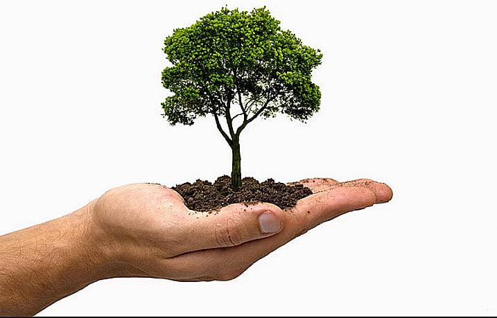 Flexibilizar Lei do Licenciamento Ambiental, ilustração mostra uma mão com uma árvore