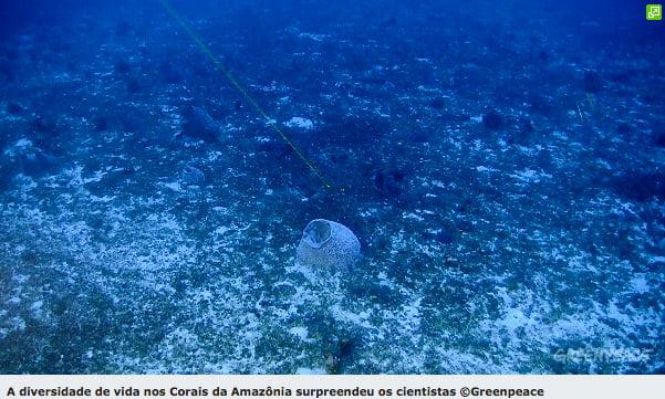 imagens dos corais da foz do amazonas