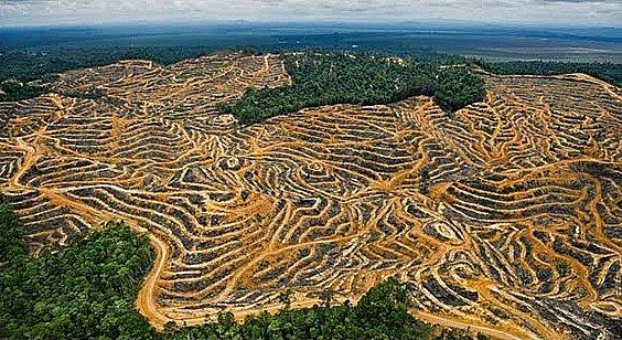 Agronegócio e meio ambiente, imagem de desmatamento causado por mineração