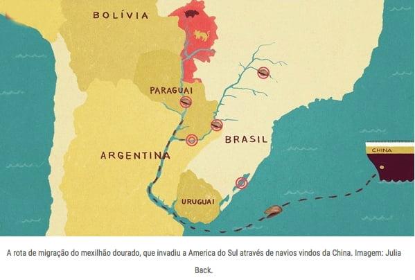 Mexilhão- dourado, ilustração mostrando o caminho do mexilhão dourado na américa do sul