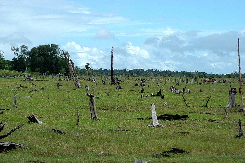 Sul da Bahia, campeão em desmatamento da Mata Atlântica, imagem de desmatamento no sul da Bahia