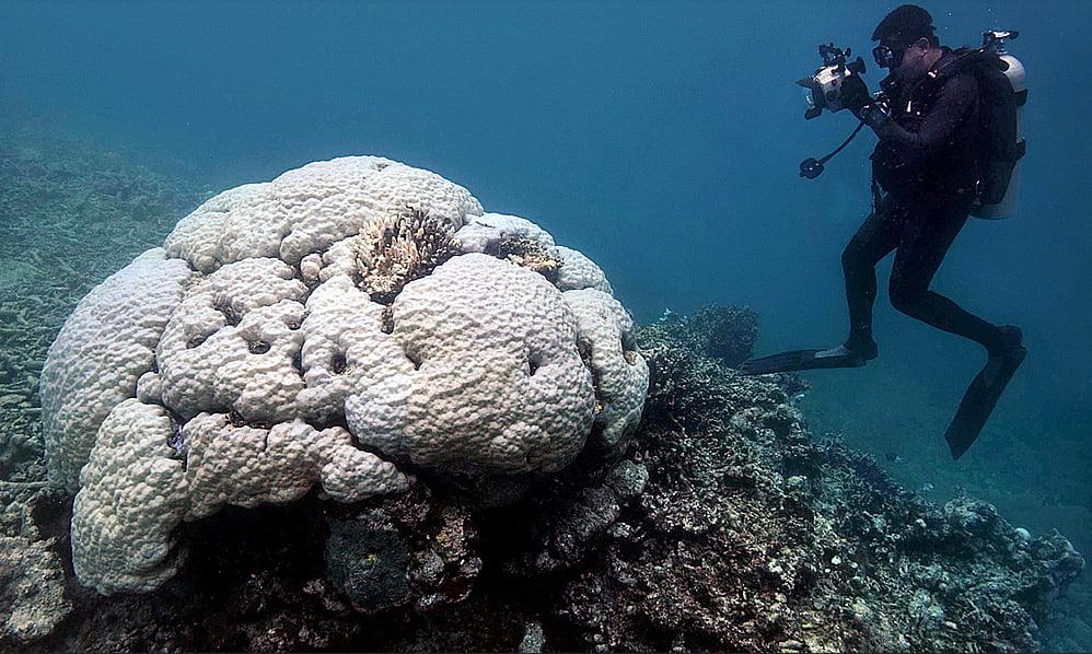 Vegetação na Antártica? , imagem da grande barreira de corais morta