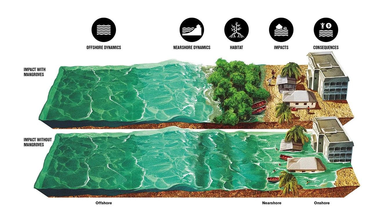 ilustração mostra a proteção da linha da costa pelos manguezais