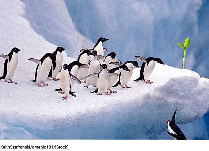 Vegetação na Antártica?, imagem de vegetação na antártica