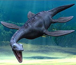 Fóssil marinho, desenho do plesiossauros