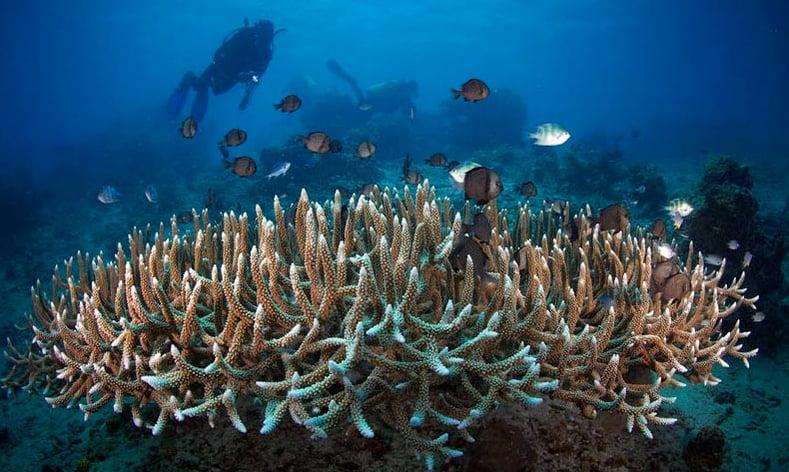 As três maiores ameaças aos Oceanos, imagem de corais