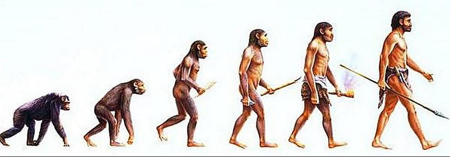 ilustração da evolução humana, do macaco ao homo sapiens