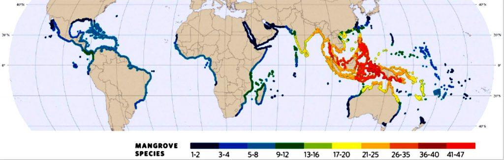 infográfico com mapa mundi e onde se localizam os manguezais