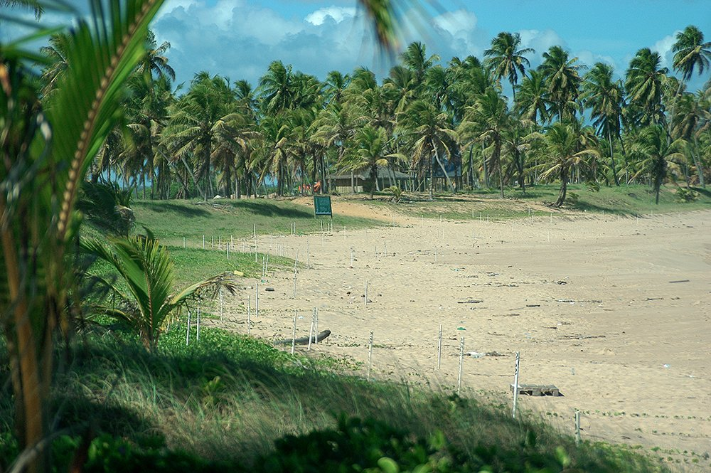 Sul da Bahia, campeão em desmatamento da Mata Atlântica, imagem de praia do forte e espaço de desova de tartarugas marinhas