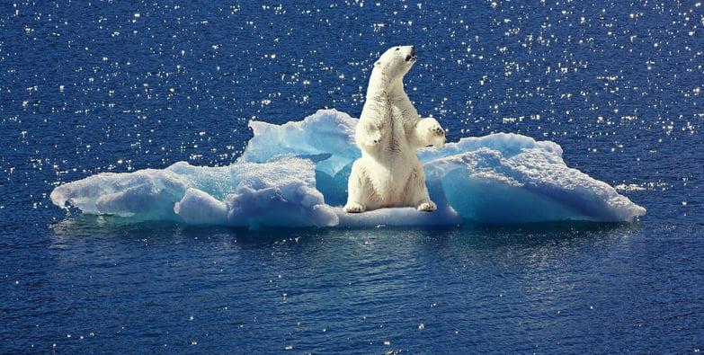 As três maiores ameaças aos Oceanos, imagem de urso polar