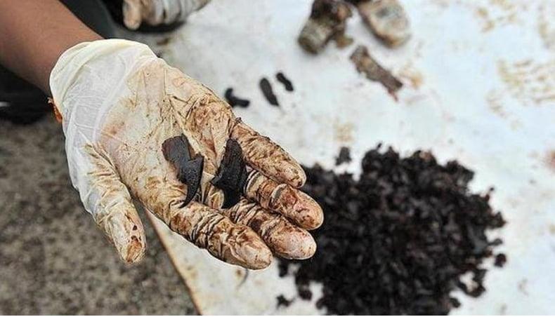 Estômago de cachalotes, imagem de mão mostrando pedaços de plástico