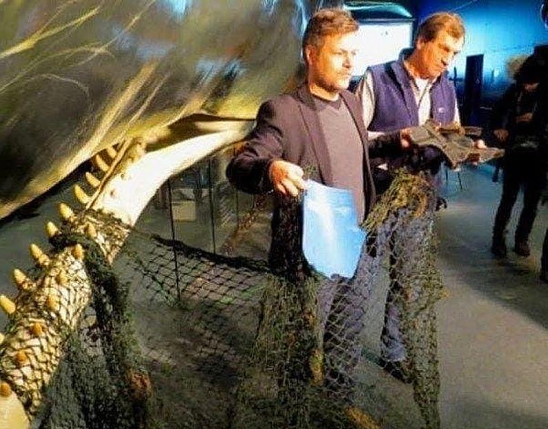 Estômago de cachalotes, imagem de baleia e rede de pesca