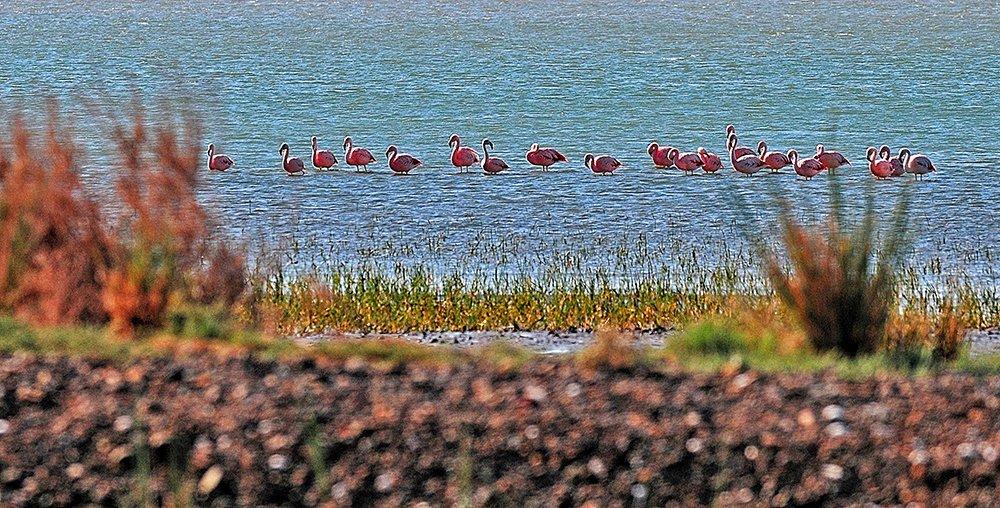 Argentina vai proteger seus mares, imagem de flamingos em san blás, argentina