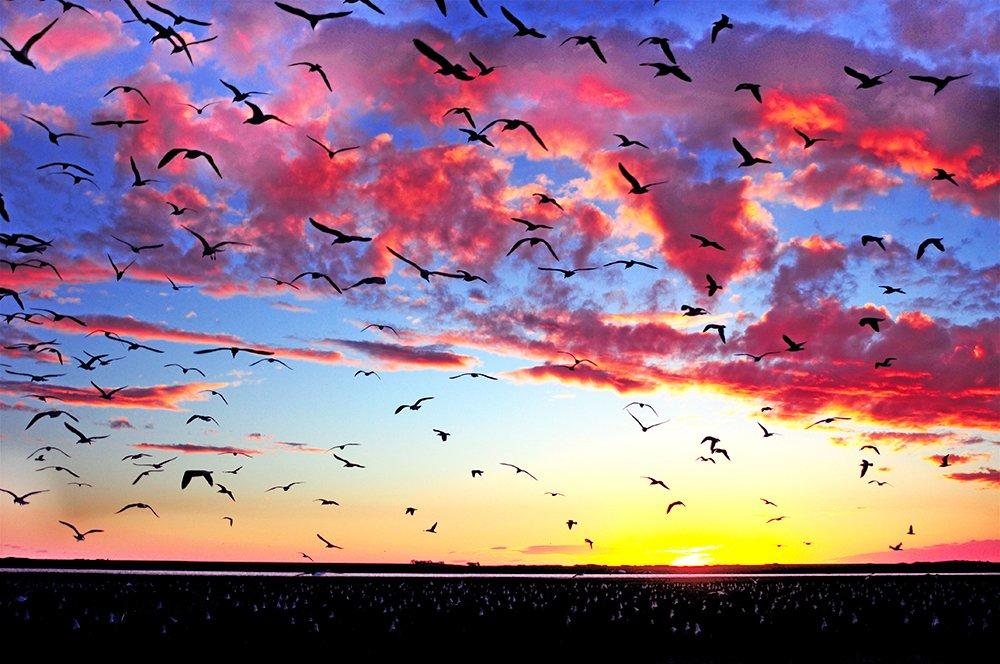 Argentina vai proteger seus mares, imagem de revoada de gaivotas em san blás, argentina