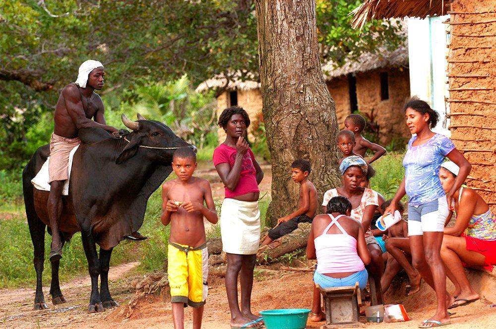 imagem do interior da ilha Cajual, Litoral de São Luís