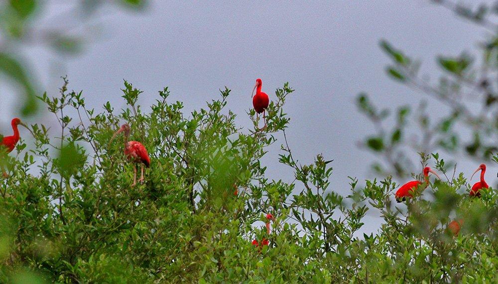 imagem da ilha dos Guarás, etapa da viagem de Litoral de Belém, no Pará, até São Luís