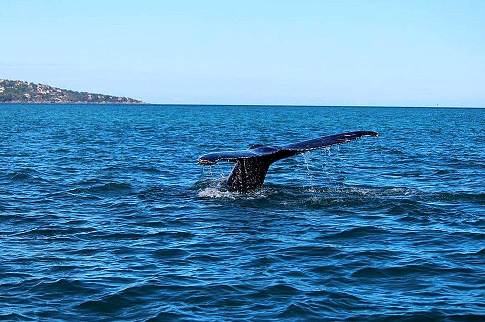 Baleias no litoral norte de São Paulo, imagem de Baleia no litoral norte de São Paulo