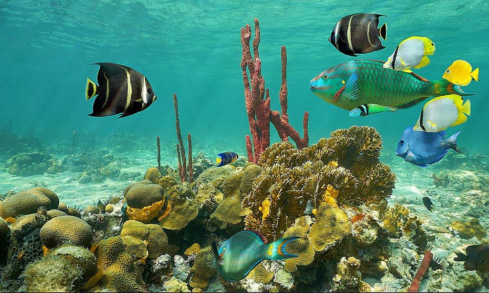 Mexico protege seus corais, imagem de corais de Cancun