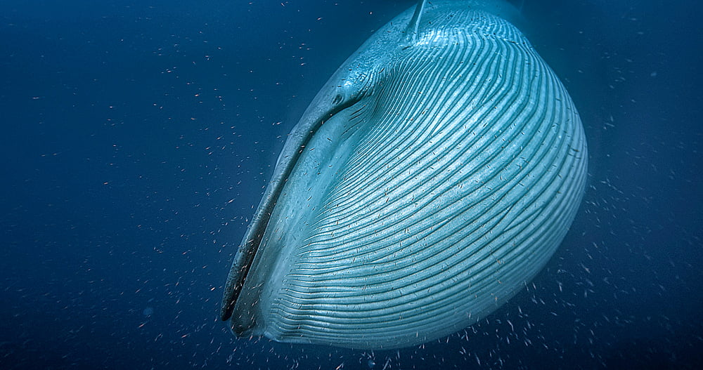 Baleias maiores animais do planeta, imagem de baleia no mar