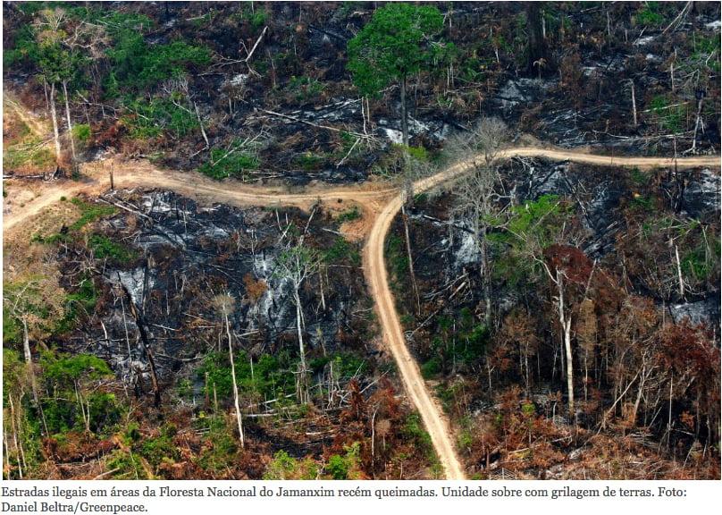 Governo dá mau exemplo, imagem de desmatamento na amazônia