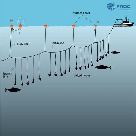 Swordfish no Mediterrâneo, ilustração da pesca com long line
