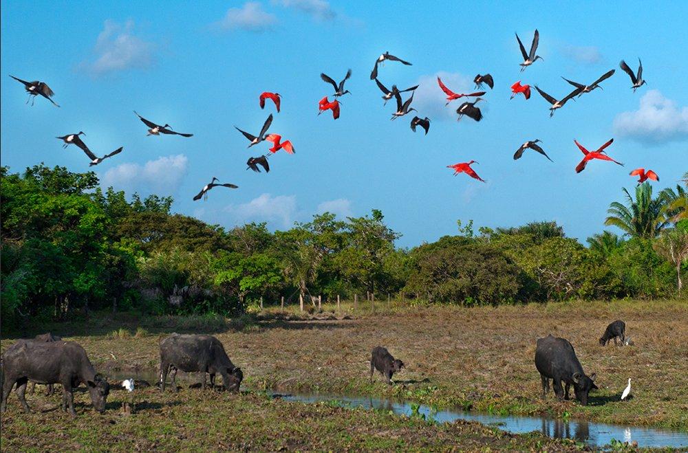 Governos querem gestão privada para parques, imagem de área protegida na ilha do Marajó